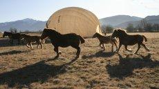 Cavalls i globus