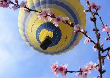 Vol en globus sobre arbres florits al Segrià