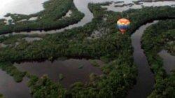 Turpial Amazon